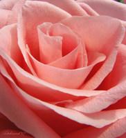 La cosmética se apunta al rosa