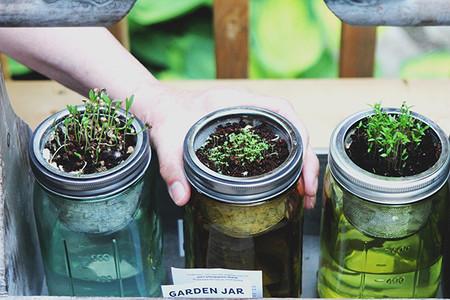 Que Puedo Plantar En Un Huerto En Casa