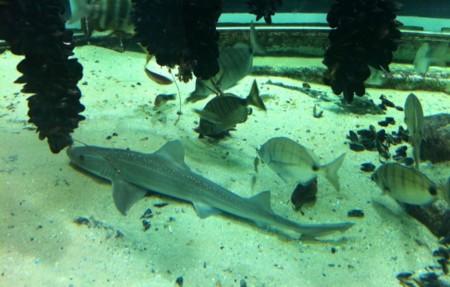 acuario museo do mar