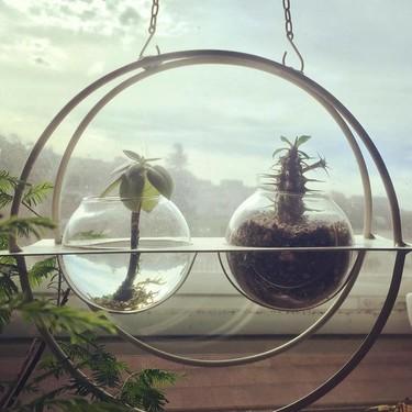 Las mejores manualidades para hacer con niños: jardines acuáticos de interior que decorarán nuestros hogares