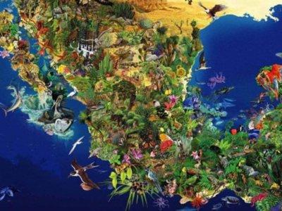 ¿Nos estamos acabando México? Un repaso por las especies en peligro de extinción (II)