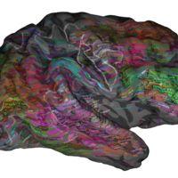 Un grupo de científicos crea el 'google maps' del cerebro pero aún queda mucho para que sea útil