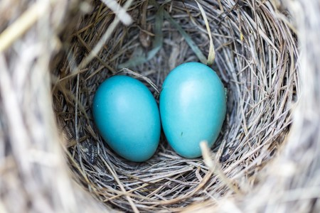 ¿Estás embarazada y pones la casa patas arriba? Es el síndrome del nido