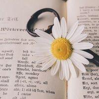 Empieza a esclarecerse la razón de que las palabras se vuelven más difíciles de recordar a medida que envejecemos