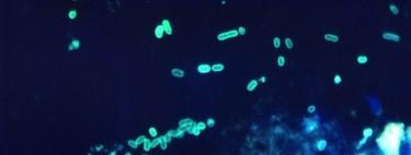 Este es primer organismo vivo con un genoma totalmente rediseñado: estamos a las puertas de crear una vida genuinamente sintética