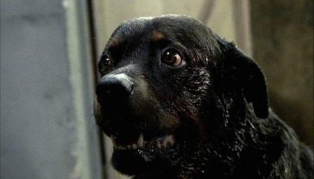 'Amores perros', sangre y redención