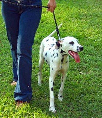 Un perro como mascota para perder peso