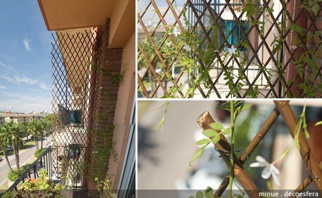 Celosía en la terraza - distribuir el jazmin