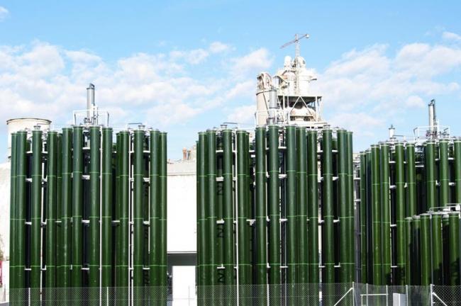Producción de algas