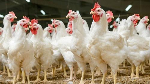 Antibióticos usados en animales para el consumo, están ocasionando un enorme problema de salud pública