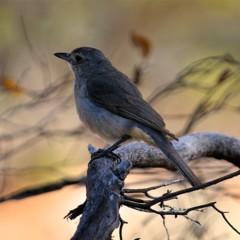 Foto 1 de 22 de la galería colores-del-gran-desierto-de-victoria en Xataka Ciencia