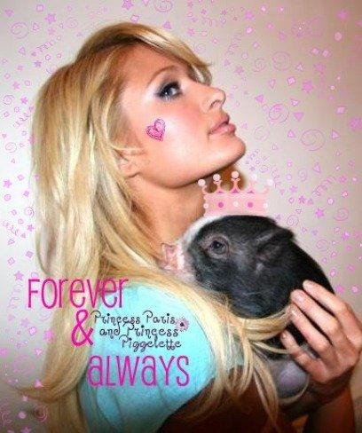La cerda de Paris Hilton