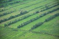 ¿Son 'positivos' los biocombustibles para la población mundial?