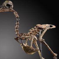 El esquleto de dodo más caro jamás subastado