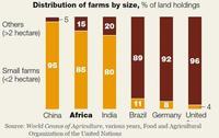 La agricultura en Africa, muy importante para el desarrollo