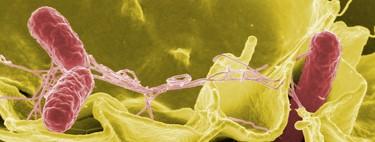 Las superbacterias, la poco conocida amenaza que debería preocuparnos tanto o más que el cambio climático