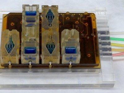 El ciclo menstrual femenino emulado con este sistema en miniatura