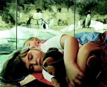 Faunia ofrece a los peques una experiencia mágica durmiendo junto a los pingüinos el próximo 14 de mayo