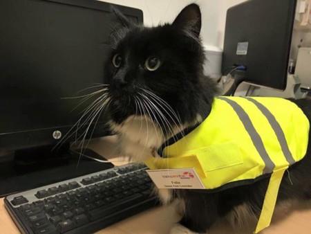 Felix no es un gato cualquiera, trabaja en una estación de tren y ha sido ascendido