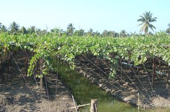 Vendimiar sobre el agua, Monsoon wines, vinos de Tailandia