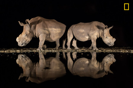 Ng 2018photocontest Wildlife 3rdplace