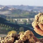 ¿Por qué la trufa blanca puede costar hasta 3.000 euros el kg?