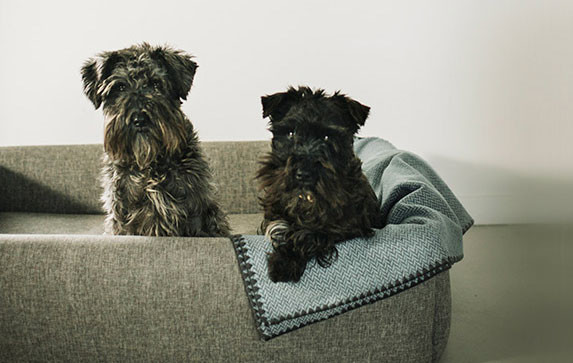 Confort Bed Hover Camas Hanniko Stylish Dog Handmade With Love