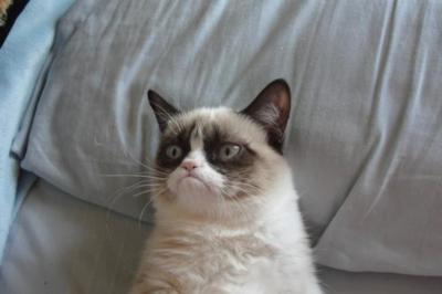 La rentabilidad de convertirse en meme: Grumpy Cat genera 100 millones de dólares [actualizado]