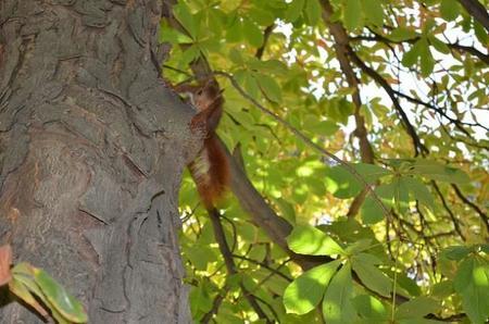 Nos lo hemos pasado estupendamente en el primer Safari de #FotosChiquititas