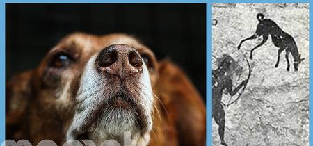 Por qué la muerte de tu perro te duele igual que la de tu mejor amigo