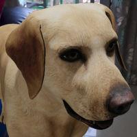 Los animales 3D de Google ahora se pueden grabar en vídeo