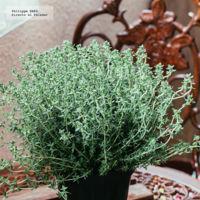 Es hora de disfrutar de las plantas aromáticas de verano