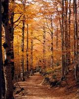Las ideas más económicas para darle a tu casa un toque de otoño