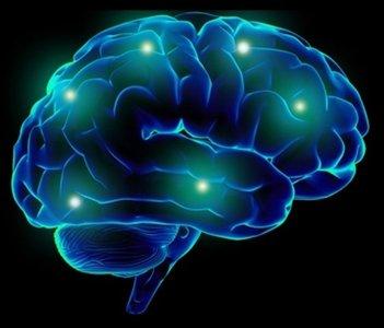 El cerebro no es hardware ni software: es wetware