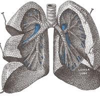 Esto es lo que ocuparían tus pulmones si los extendieras completamente