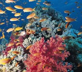 Los corales del Pacífico están desapareciendo