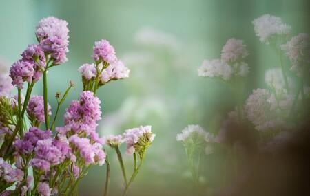 Flores que secan bien