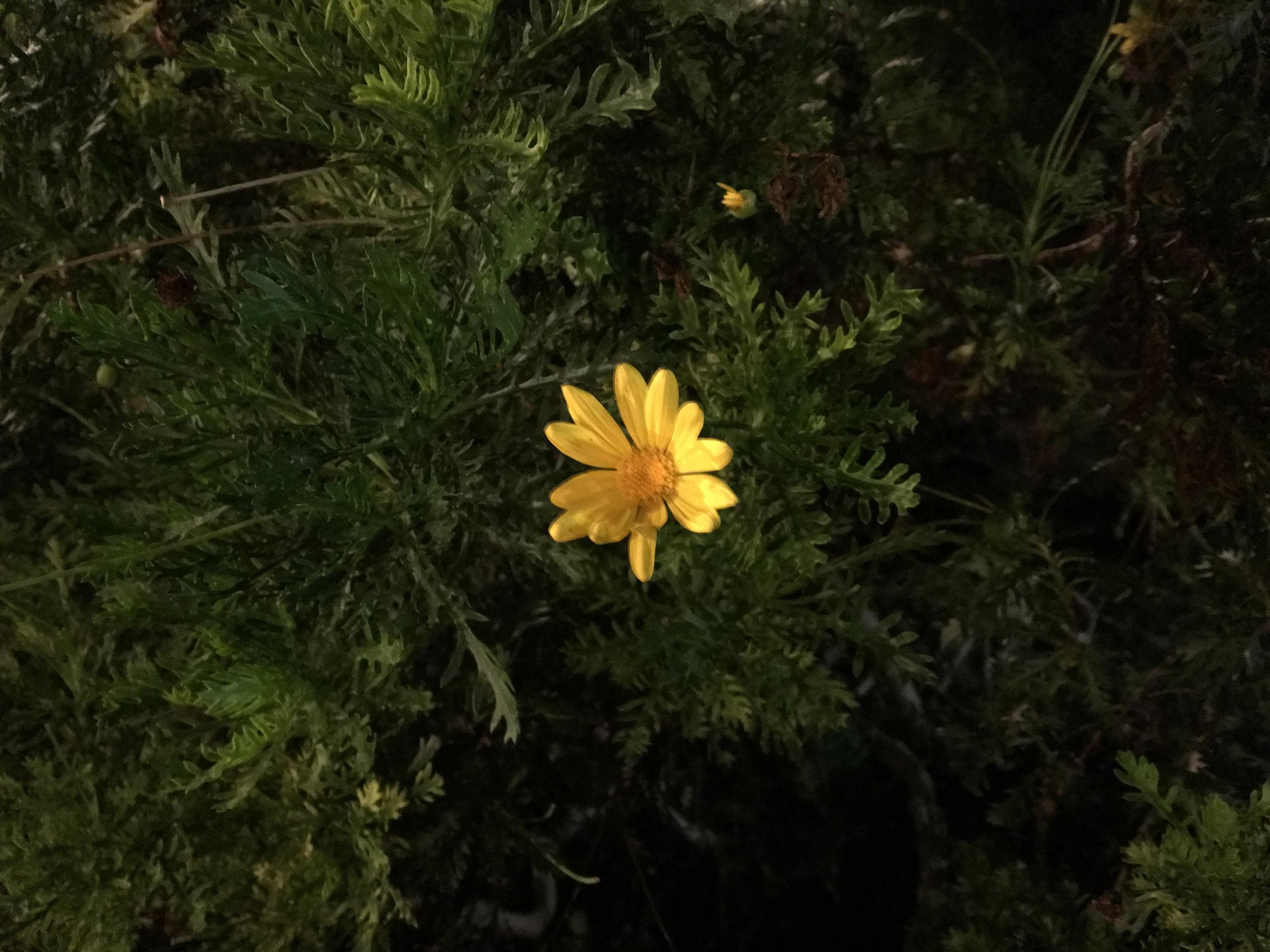 Foto de Muestras iPhone 6s Plus (11/12)