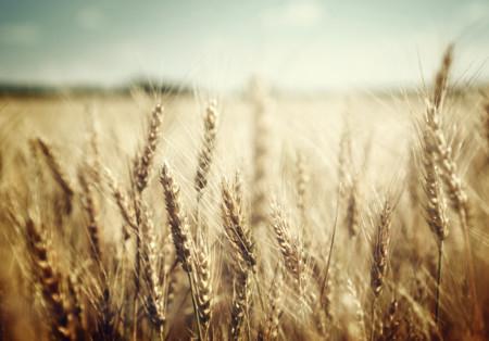 ¿Qué tiene la harina de grano completo que la hace especial?