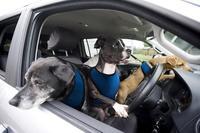 Volkswagen lanza su programa de entrenamiento para perros conductores