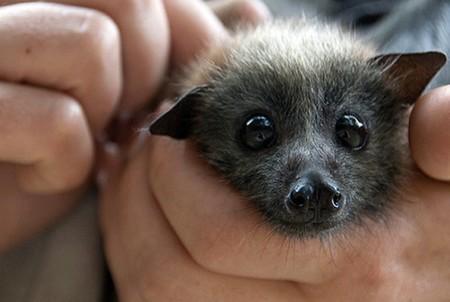 [Vídeo] El vuelo de los murciélagos al descubierto mediante vídeos de rayos X de alta velocidad