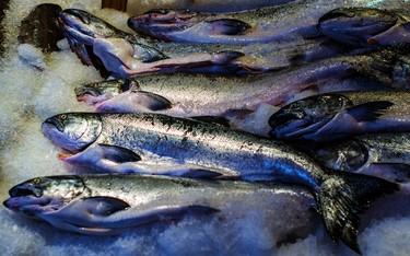El precio del salmón alcanza máximos históricos y la culpa la tiene un diminuto parásito