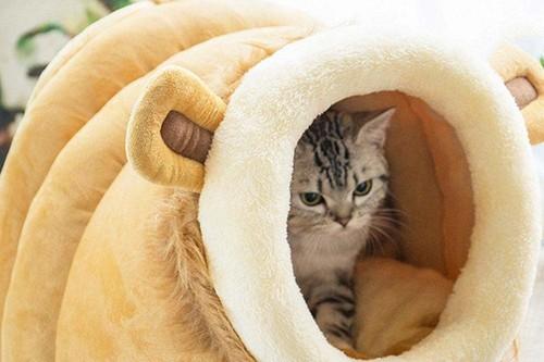 18 compras prácticas para mascotas: desde un dispensador automático de agua hasta protectores para tus muebles
