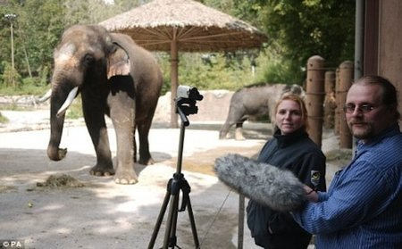 Koshik: el elefante que habla coreano