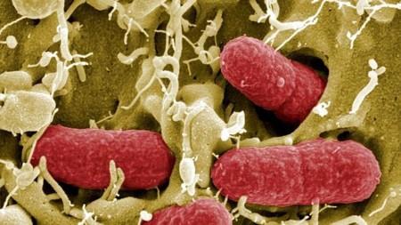 Podremos diagnosticar cáncer con un simple test de orina gracias a una bacteria transgénica