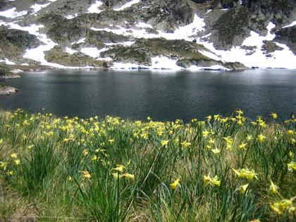La foto de la semana: La primavera en los Pirineos