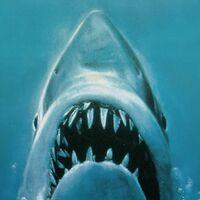 'Tiburón': Steven Spielberg rechaza la idea de un reboot para su obra maestra