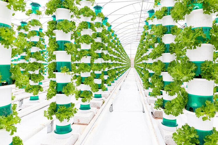 Eso que se ve en la imagen no es un jardín, es el futuro de la agricultura: así es como estamos multiplicando por cuatro la productividad de la tierra de cultivo
