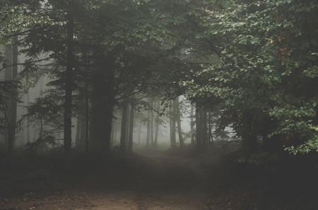 Trucos Consejos Hacer Fotos Niebla Neblina 6