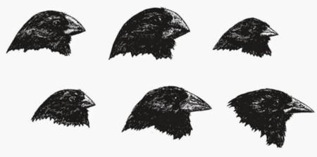 Pinzones Darwin